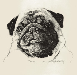 Pugsly is a Cutie