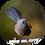 Thumbnail: Black Morph Fantail / Pīwakawaka