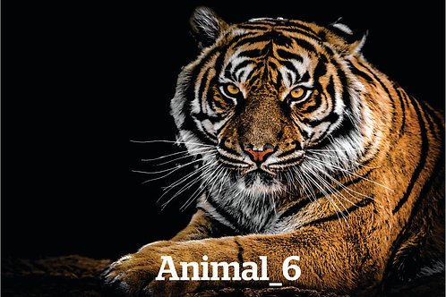 Stretched Canvas Prints (Animal)