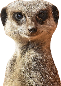 Te Anau Signs Meerkat who we are.png