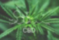 CBD-Therapy-Molecular-Structure.jpg