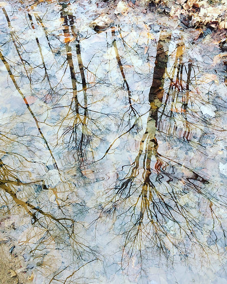 Reflection of maple trees in water