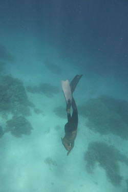 Jone Fish Factory Freediiving
