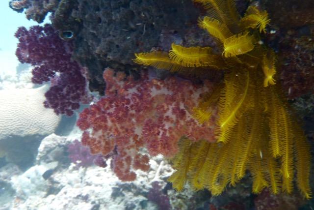 Soft Corals Rainbow Reef