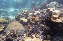 Corals Rainbow Reef 3