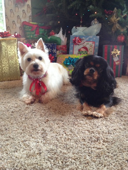 client-dogs-sitting-with-presents