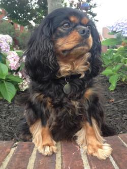 small-dog-sitting-in-garden