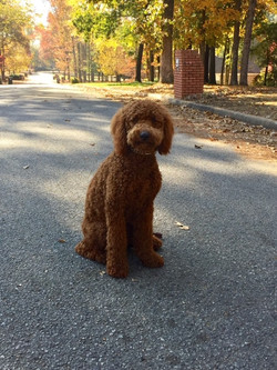 training-client-dog-sitting-down