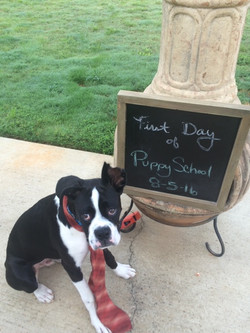 training-client-dog-sit-with-sign