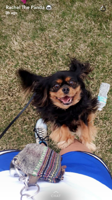 happy-client-dog