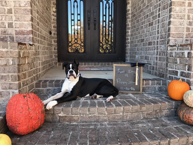 training-clients-dog-laying-on-porch