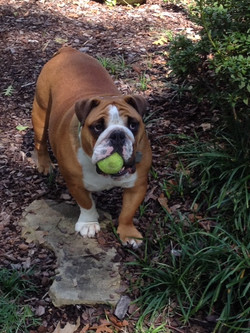 happy-training-dog-with-tennis-ball