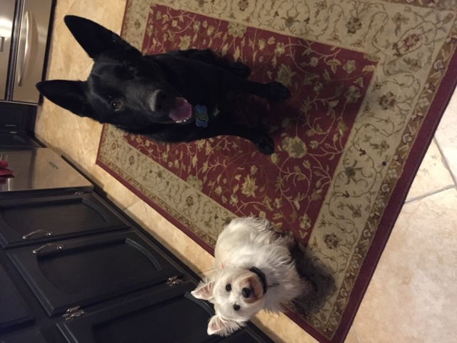 two-client-dogs-sitting
