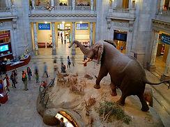 dc-natural-history-museum.jpg