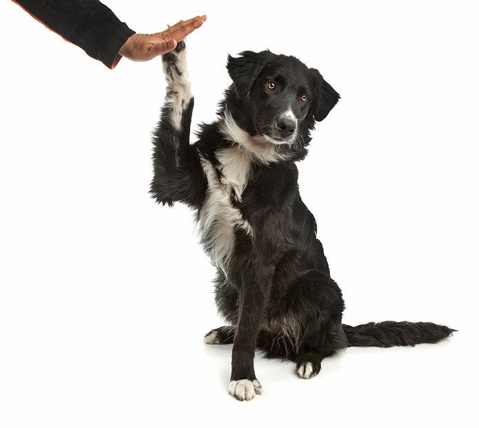 Novice Trick Dog Class