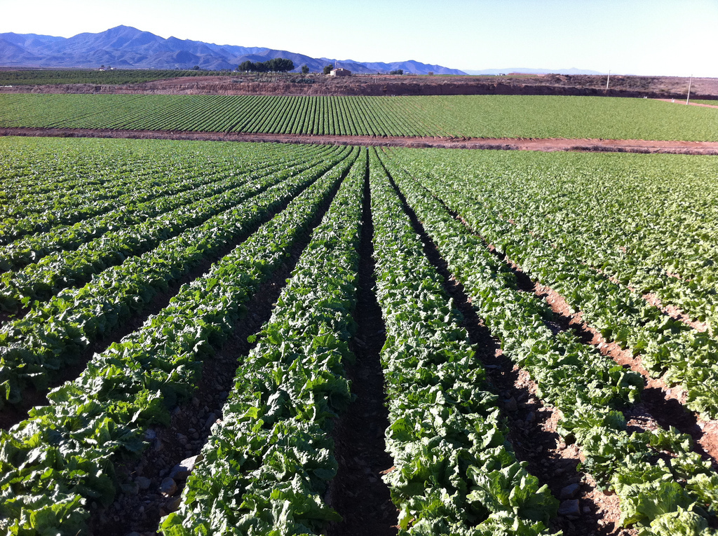 Grupa Pulpi lettuce farm, Spain