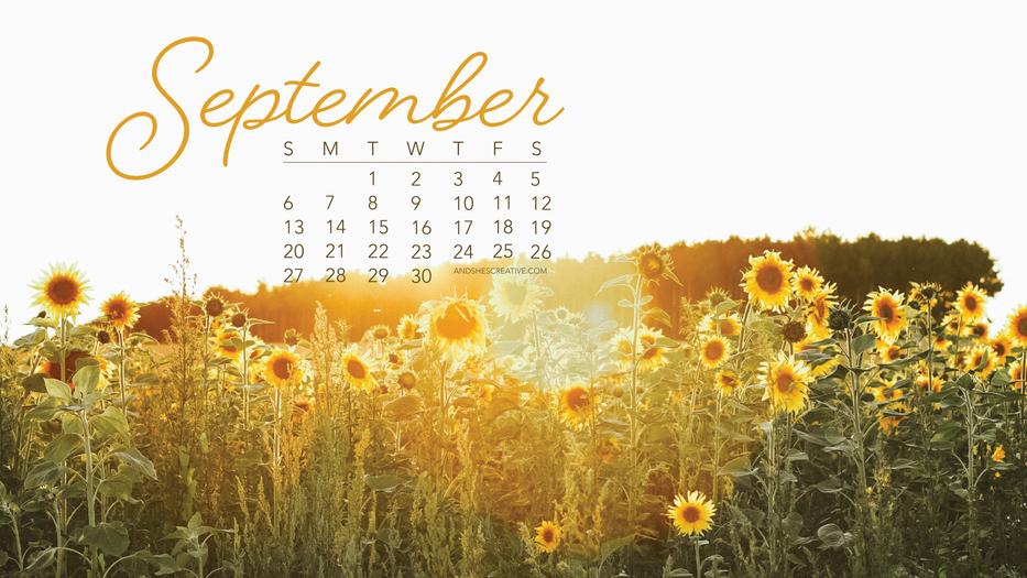 September Sunflower Desktop Background