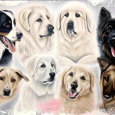 Les chiens de ma vie
