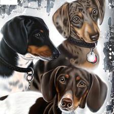 Daisy, Rosie et Charlie