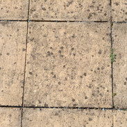 Black Lichen.jpg