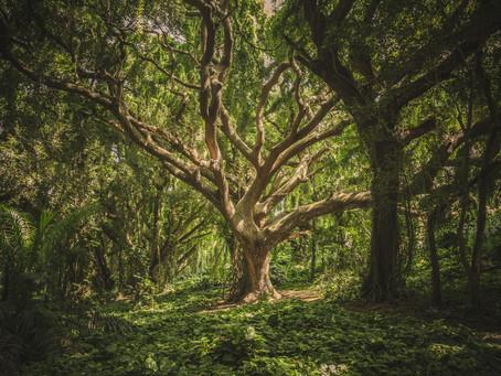 Be The Oak Tree