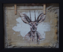 Washingline Steenbok 1