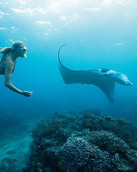 Femme Snorkeling avec Stingray