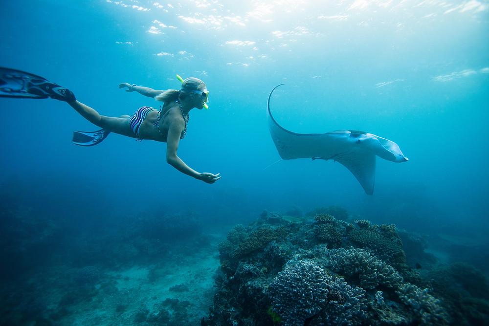 Snorkeling Sting Ray St. John USVI Andante