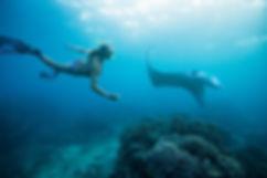 Snorkeling mulher com Stingray