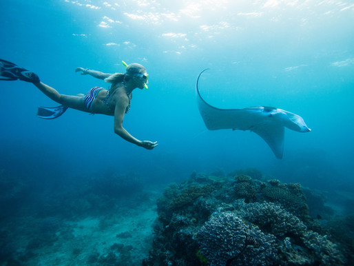 Stingrays, Sharks, and Rip Currents