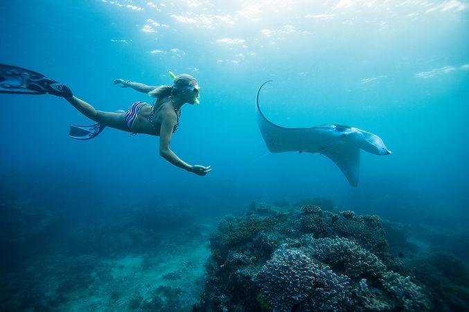 女子浮潛與黃貂魚