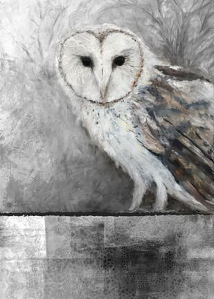 La Chouette-effraie_barn_owl.jpg