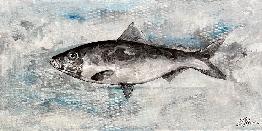 Alewife fish original painting by Ericka O'Rourke