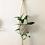 Thumbnail: MDRN. Good Vibes | Macrame Plant Hangers