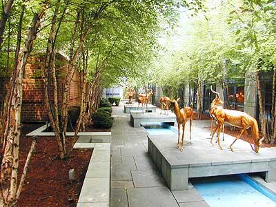 Impala Garden