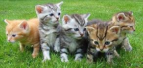 kittens%20in%20line_edited.jpg