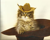cat in cowboy hat- old fashioned.jpg