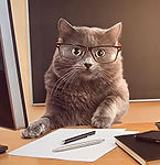 cat businessman with glasses at the tabl
