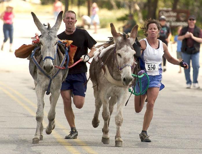 bv_burro_race04.jpg