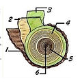 Understanding wood: How Does It Grow For Our Use and Consumption?
