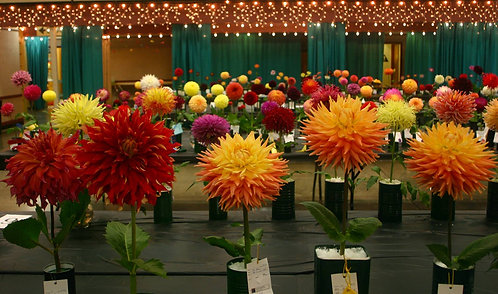 Wild Rivers Dahlia Society Show