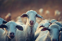 animals-cattle-domestic-390025.jpg