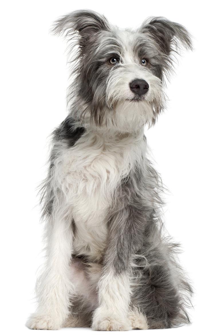 Gesunde Hundesnacks, Natürliche Kauartikel für Hunde