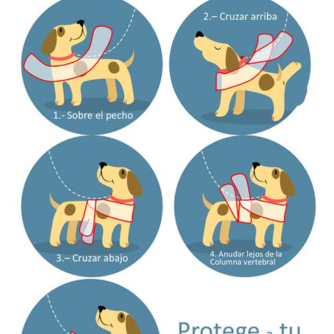 Método para Cuidar a tu mascota de los fuegos artificiales