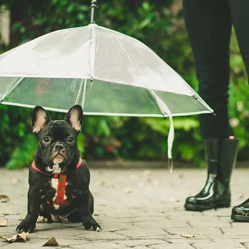 Si! Hay paraguas para perros y los fabrica Para Pelukas