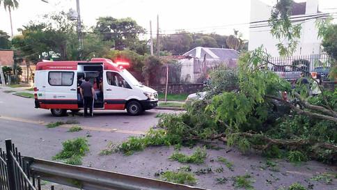 Caminhão engata em galho e derruba árvore em Curitiba