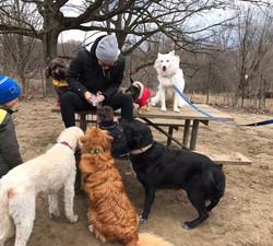 Jenna & dogs