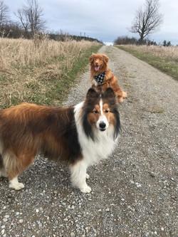 Fergus and Goose