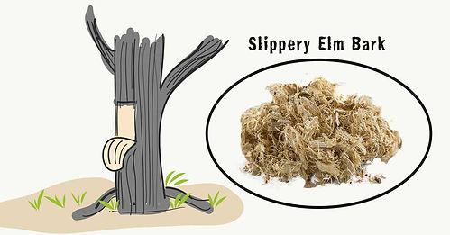 Slippery-elm-bark.jpg