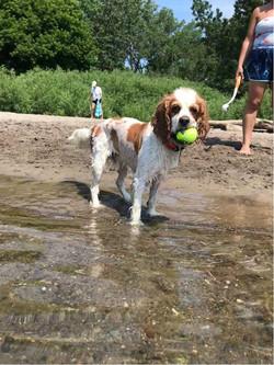 Pet Sitting Splash